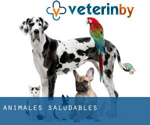 Animales Saludables