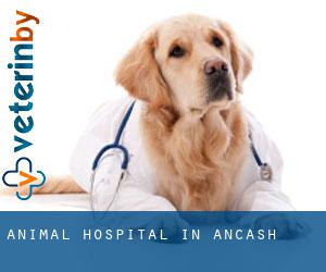 Animal Hospital in Ancash