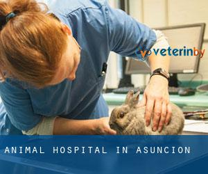 Animal Hospital in Asuncion