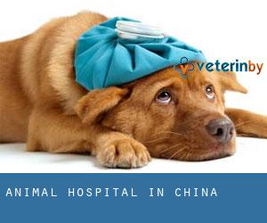 Animal Hospital in China