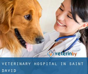 Veterinary Hospital in Saint David