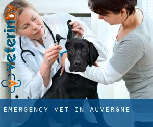 Emergency Vet in Auvergne